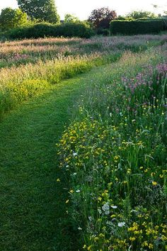 25 Beautiful Wildflower Field Ideas Our Garden Meadow Garden You are in the right place about Garden Types landscapes Here Garden Types, Garden Paths, Garden Landscaping, Landscaping Ideas, Inexpensive Landscaping, Natural Landscaping, Country Landscaping, Garden Borders, Modern Landscaping
