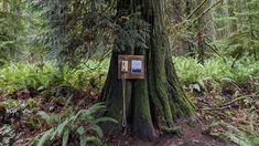 The concept could not be simpler or more profound: Place a disconnected telephone in the woods, available to anyone who needs to talk to someone who cannot hear them. Talking On The Phone, Cute Dog Pictures, Lose Something, Out To Sea, Old Phone, Land Art, Conceptual Art, Telephone, Olympia