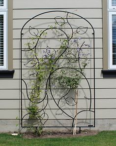 Bon Billedresultat For Metal Trellis Climbing Plants And Flowers, Lovely,  Beautiful