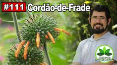 Autor da Própria Saúde - Cordão de Frade [hipertensão, antibiótico, cânc...