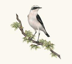 Beautiful Bird #Drawings by Violaine & Jeremy #art #inspiration #illustration
