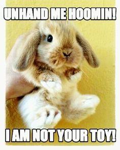 Unhand me! #rabbit #bunny #bunnies #cuteanimals #pet
