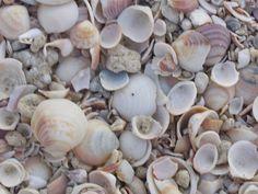 shell-background.jpg (1280×960)