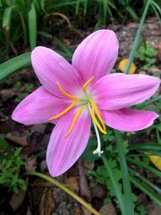 Phenomenon 88+ Beautiful Rain Crops You Must Plant In Your Home Garden https://decoor.net/88-beautiful-rain-crops-you-must-plant-in-your-home-garden-6756/
