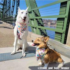 Dog Friendly Stillwater, MN - Discover Stillwater Stillwater Minnesota, History Taking, Ny Style, Dog Sweaters, Service Dogs, Weekend Getaways, Dog Friends, Fall Halloween, Corgi