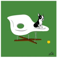 Boogie On: Boston Terrier Takes On The Classic Chairs | Apartment Therapy via http://www.doggiedrawings.net/