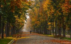 Central park from Cluj Central Park, Romania, Country Roads, Places, Destinations, Travel, Autumn, Beauty, Vintage Travel Posters
