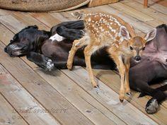 Amistades entre animales  Dicen que los opuestos se suelen atraer, pero nunca habrías pensado encontrar amistades entre animales como las que vas a...