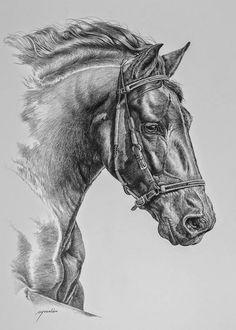cuadros-de-cabezas-de-caballos