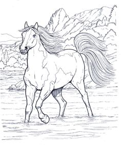 Horses 10 Adult Coloring Pages Horse Coloring Pages Animal