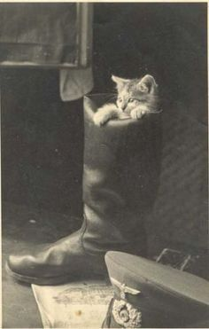 In 1915, the New York Police Department had more than 100 house cats on the roster. Pete, Bill, and Tammy were just a few of the mousers on the job in Morrisania.