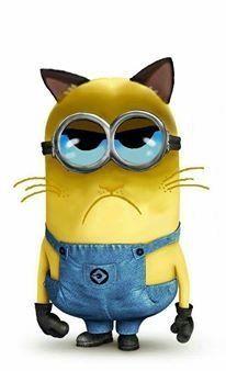 Grumpy minion