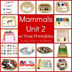 Every Star Is Different: Mammals Unit 2 w/ Free Printables