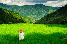 Kabayan Rice Farmer