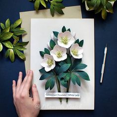 An intricately quilled botanical illustration of Helleborus Orientalis flowers - White Lady. This is an original design entirely made by hand from paper strips in a technique called paper quilling. Each flower and leaf is individually stemmed with wire to create a rich 3D effect. I used