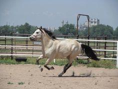 (77) Saddled and Ready
