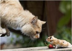 """""""How 'Bout This - I Give You a Nice Strawberry and You Don't Eat Me"""" -K?"""