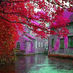 Brugge  Belgium,  love the color, would make beautiful painting