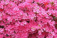 flowers - Yahoo Search Results
