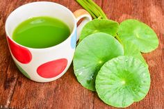 Listy pupečníku můžete jednoduše rozmixovat ve vodě Gotu Kola, Home Food, Korn, Reduce Inflammation, Small Plants, Medical Advice, Active Ingredient, Pesto, Health Benefits