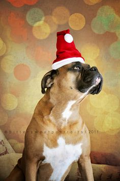 Boxer Merry Happy Christmas Day Card Puppy Holiday Dogs Santa Claus Dog Puppies Xmas #MerryChristmas
