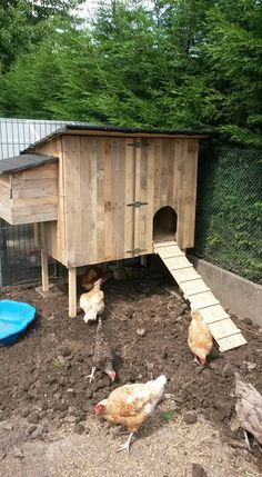 Building a chicken coop does not have to be tricky nor does it have to set you back a ton of scratch. Backyard Chicken Coop Plans, Chicken Coop Pallets, Chicken Garden, Building A Chicken Coop, Chickens Backyard, Keeping Chickens, Raising Chickens, Bantam Chickens, Urban Chickens