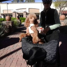 """""""Fonzie loves bike riding - here he is on the back seat of our tandem. He not only loves Sedona, he looks like Sedona! He is a red/rust colored pure-bred miniature poodle.""""  #ElPortalSedona #SedonaGetaway #petphotocontest"""