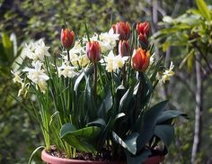 Pot bulbs in Fall for Spring flowers.  http://seattletimes.nwsource.com/html/homegarden/2003927789_marygarden06.html