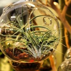 I'm not sure about you but air plants make me happy @jimbosnaurally #pinspired #minimal #beinspired #airplants #dslr #homedecor #sandiego #jimbosnaturally #thelittlethings #nofilter #downtownsd