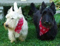 Mr. Tweed's Whimsical garden Scottish Terriers