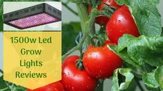 The 1500 watt led grow light provides lights with amazing features that will instantly light the room. If you were wondering which lights to buy read this.