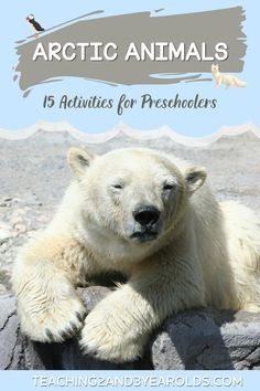 These preschool arctic animals activities are great for teaching your toddlers about which animals live in the arctic in a fun way. Free printables are included in this collection, too! #arcticanimals #preschool #activities #science #teaching2and3yearolds Animal Activities, Winter Activities, 3 Year Olds, Arctic Animals, Preschool Science, Tot School, Winter Theme, Winter Food, Polar Bear