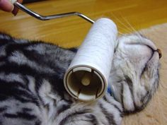 Lint Rolling Cats is Trending in Japan right now! See more here: http://www.pauseandplay.co.uk/lint-rolling-cats-in-japan/