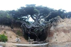 15 Places in Washington You Must See Before You Die. 15. Tree Cave in Kalaloch, Olympic National Park