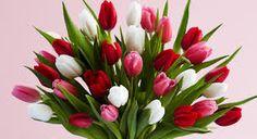 Flower Shops In,  http://www.cleaningtalk.com/members/flowershopping-26209/  Flower Shops Near Me,Flower Shop,Flower Shop Near Me,Flower Shops,Flowers Near Me,Floral Shops Near Me,Floral Shops,Nearest Flower Shop