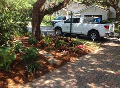 shady area planted into bromeliad garden