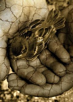 A bird in the hand.....