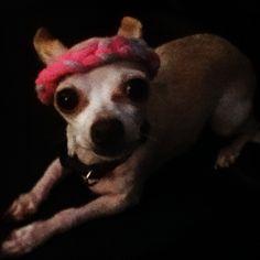 Dog headband.