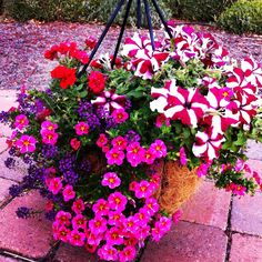 Cheery hanging basket. Such gorgeous, stunning beauties!