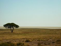 The African Plains, Namibia