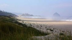The Oregon Parks and Recreation Department released its initial plan forSitkaSedge State Natural Area , a 357-acre landscape of forest, estuary, dunes and beach just north of Pacific City