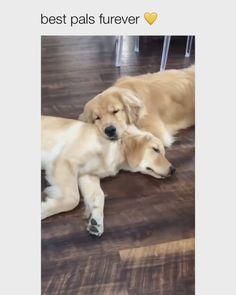 Animal Jokes, Funny Animal Memes, Funny Dogs, Cute Little Animals, Cute Funny Animals, Animals Beautiful, Most Beautiful Dogs, Amazing Dogs, Cute Dogs And Puppies