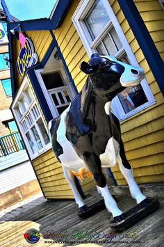 Cows Ice Cream Shop, Halifax ~ My favorite ice cream shop! Ice Creamery, Halifax Waterfront, My Adventure Book, Discover Canada, Purple Cow, East Coast Travel, Canadian Travel, Atlantic Canada, Places