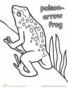 poison arrow frog coloring page
