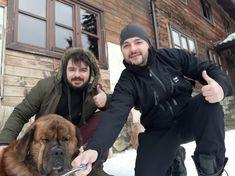 # mountain dog Saint Bernard