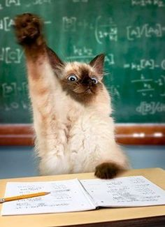 Option 1: No matter what you do in class this cat always raises his hand and answers the question before you. How does this make you feel? What are you going to do? Option 2: A new student has come to your class. But something is odd...Talk about how you can become a friend of the new student, and what you might like to do with the cat...oops, i mean student.