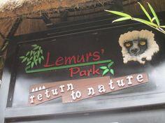 Lemurs Park (Antananarivo, Madagascar): Top Tips Before You Go - TripAdvisor Online Tickets, Lemurs, Trip Advisor, Madagascar, Christmas Ornaments, Park, Holiday Decor, Articles, Tattoo