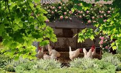 Bio, Countryside, Coqs, Quails, Crochet, Garden, Country, Animal Shelters, Garden Projects