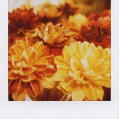 #polaroid #pola #ポラ #600film #SX70 #ポラロイド #polaroidsx70 #instantfilm #instagramjapan