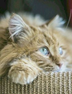 Check out what I discoveredTop 10 Most Beautiful Cats Breeds #superb